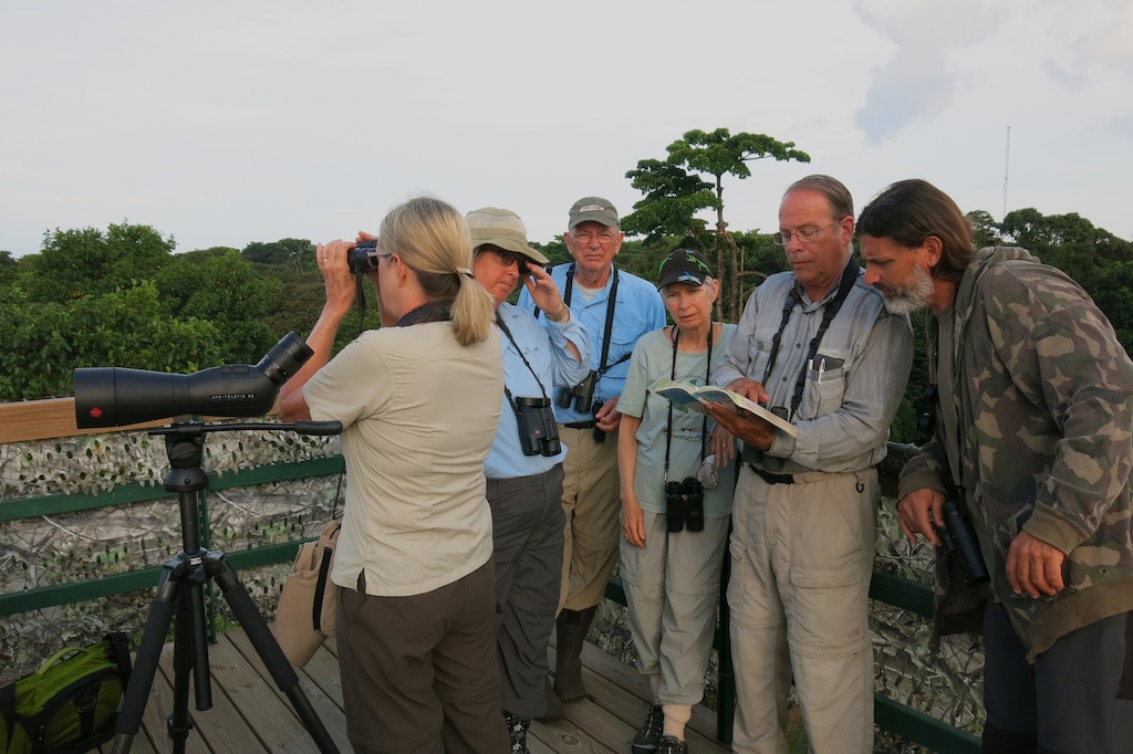 Panama Bird Watching