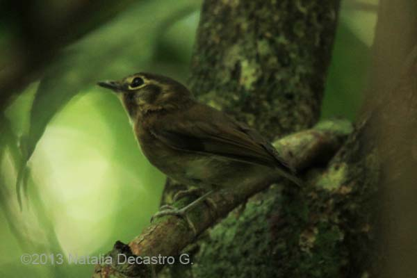 Birdwatching Panama