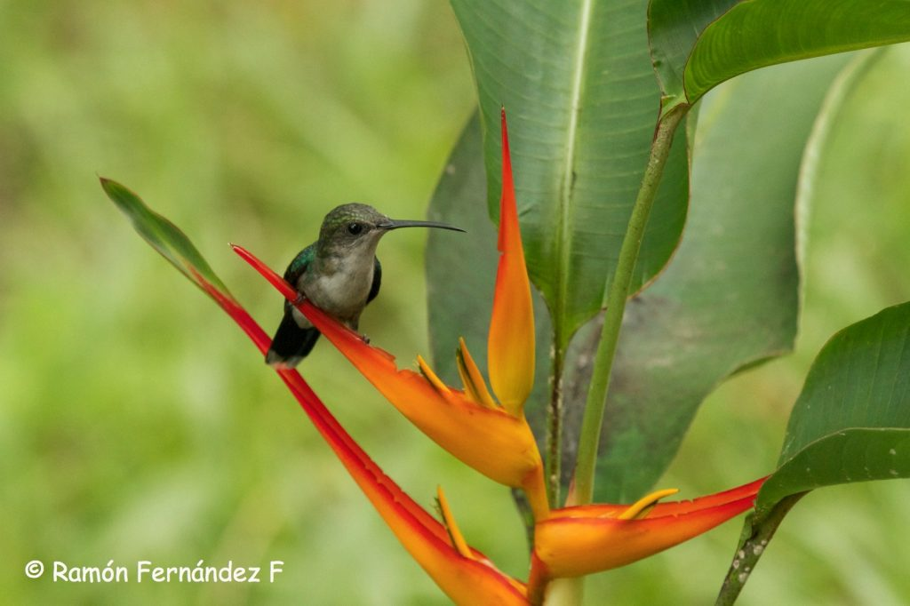 Hummingbird Watching Panama