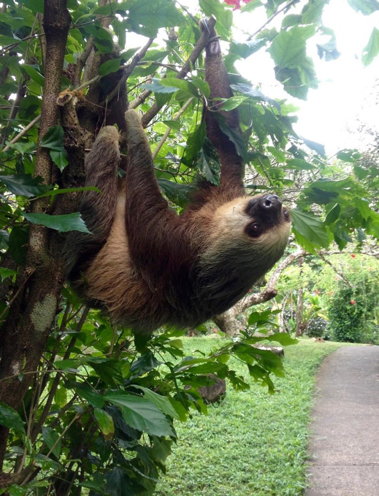 Sloth Commute