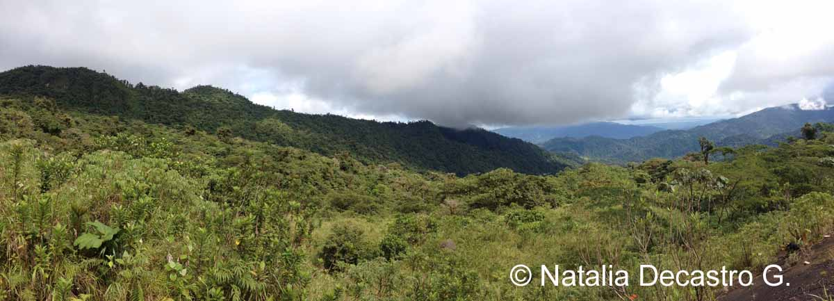 Palo Seco Protected Forest