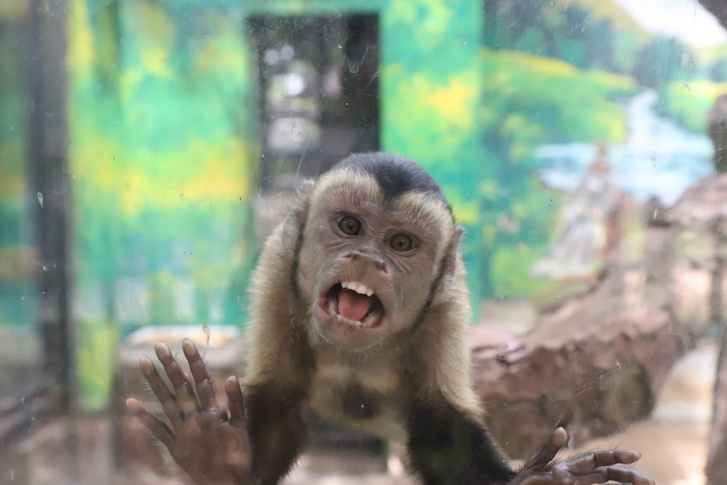 Monkey looking through glass directly at you.